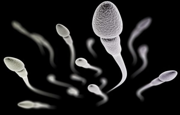 אבחון ומיון תאי זרע בהגדלה (IMSI): הטכנולוגיה החדשה להפריה חוץ גופית